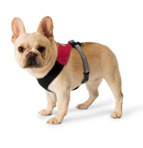 colliers ou harnais pour chien