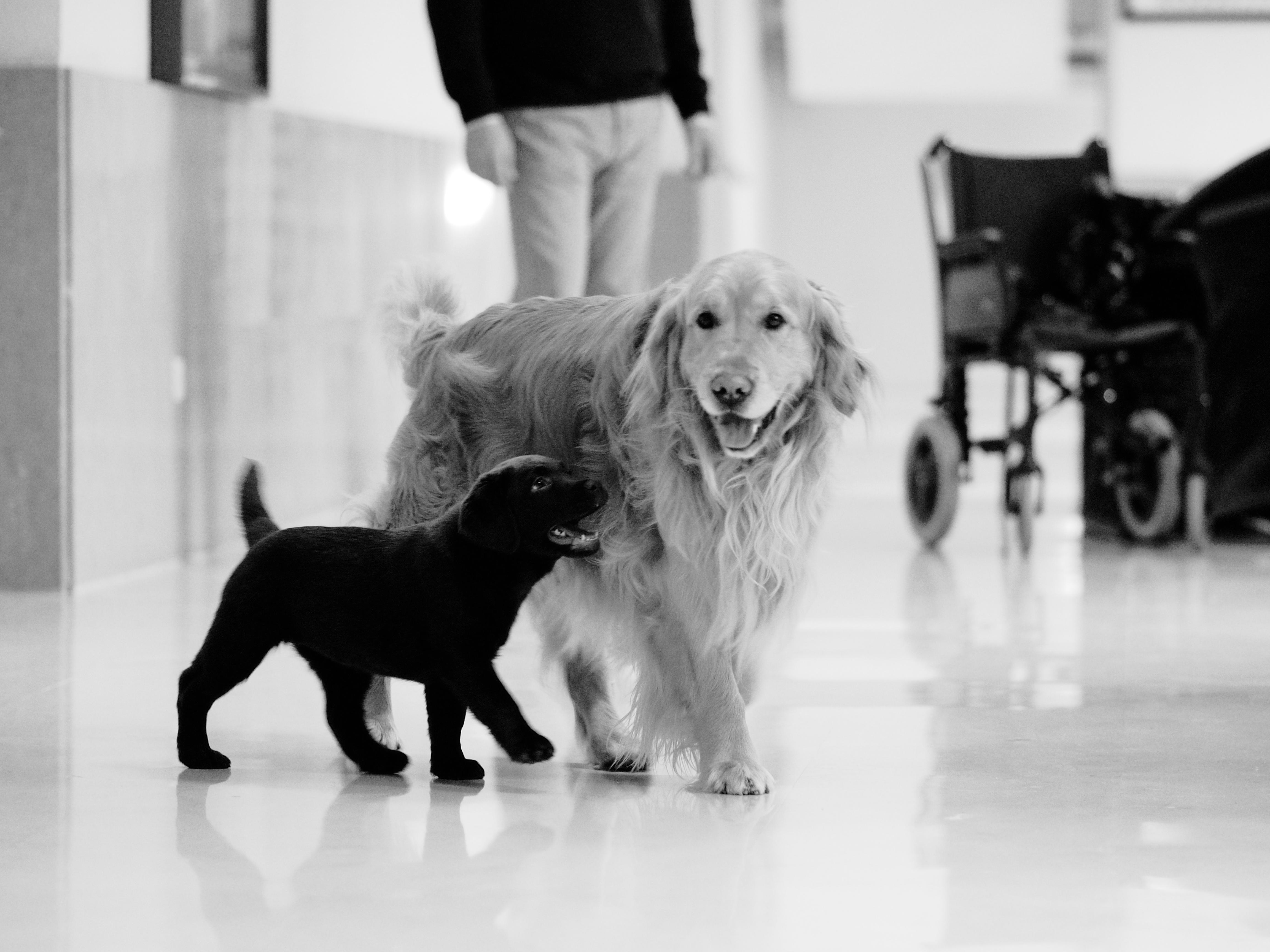 chien de thérapie alzeimer