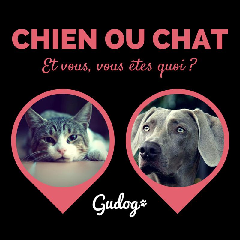 Chien ou chat dites nous quel est votre animal et nous - Chat ou chien ...