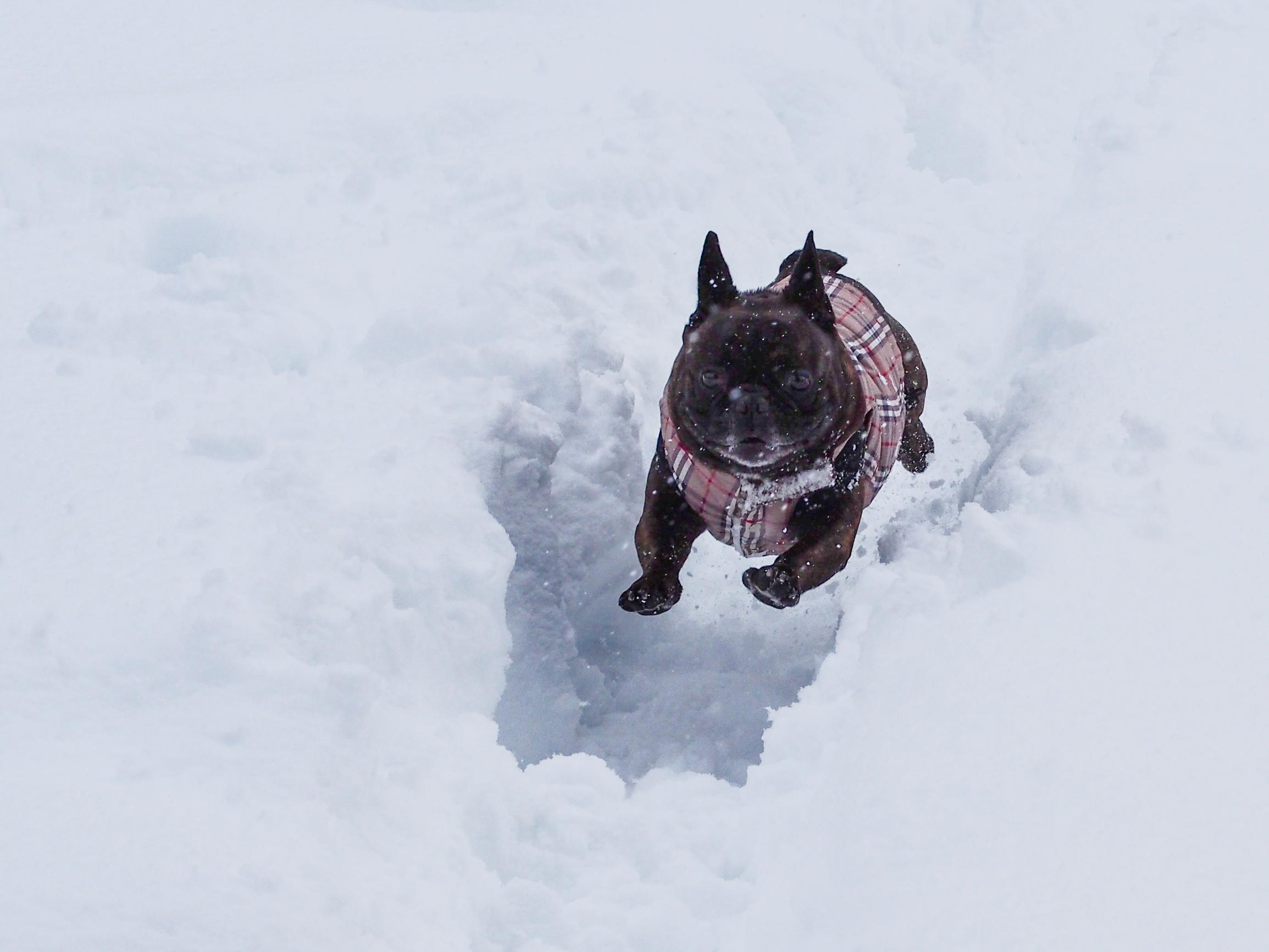 sports d'hiver chien