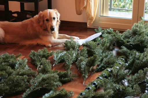 noël sans danger chien arbre sapin