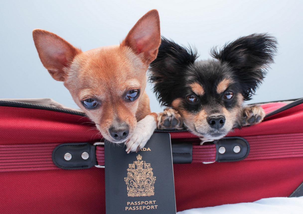 viajar al extranjero con un perro