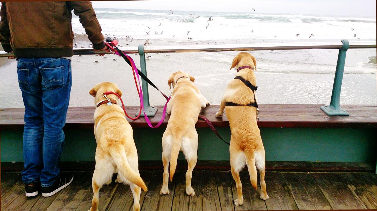 dog sitter garderie de jour résidence canine