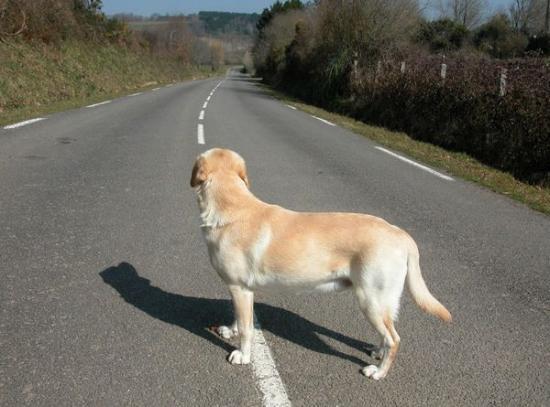 chien-perdu