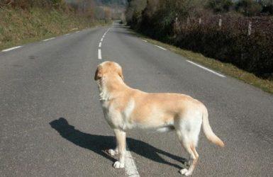 pourquoi mon chien se perd