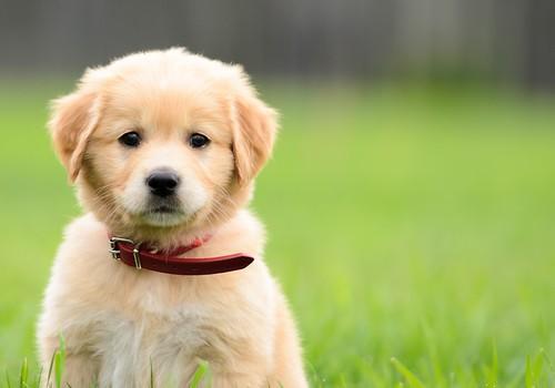 puppy-500x350