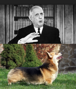Général de gaulle chien corgi rasemottes