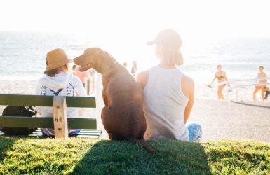 protéger votre chien du soleil été