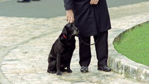 baltique chien miterrand