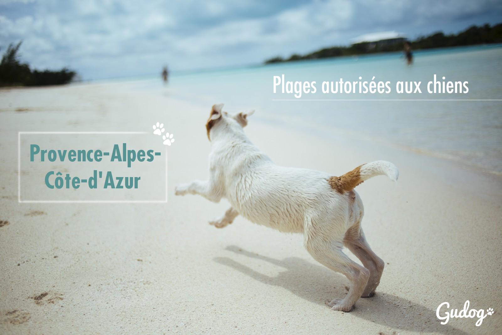 plages autorisées aux chiens provence-alpes-côte-d'azur
