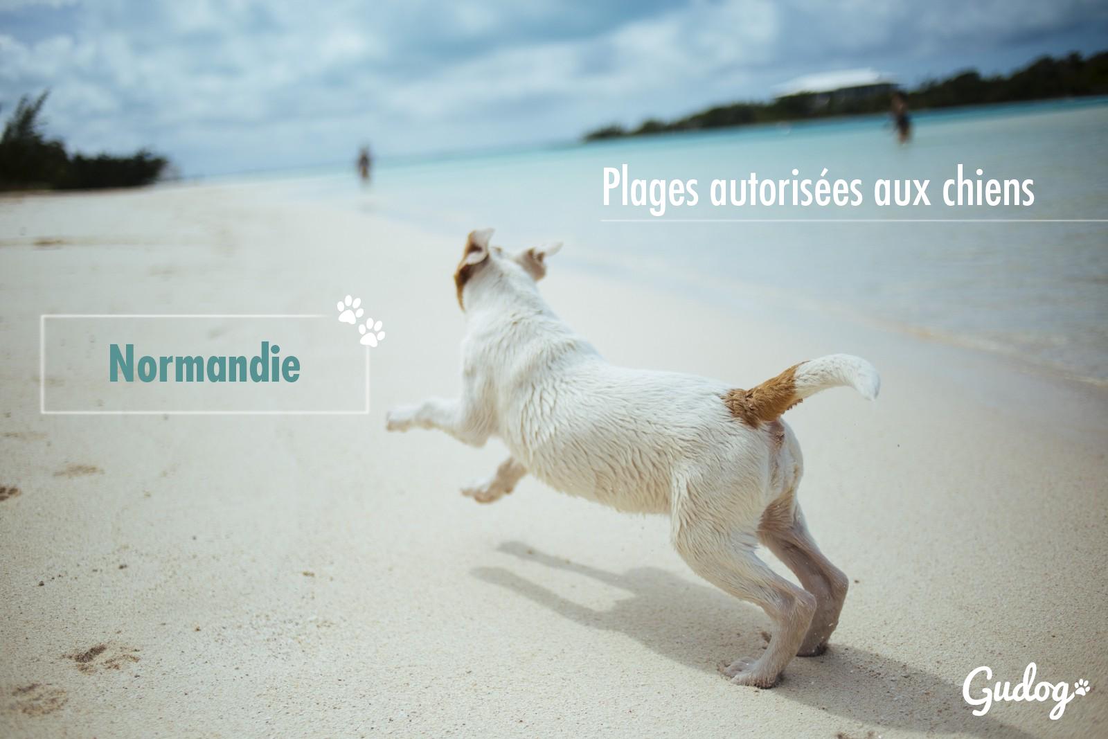 plages autorisées aux chiens normandie