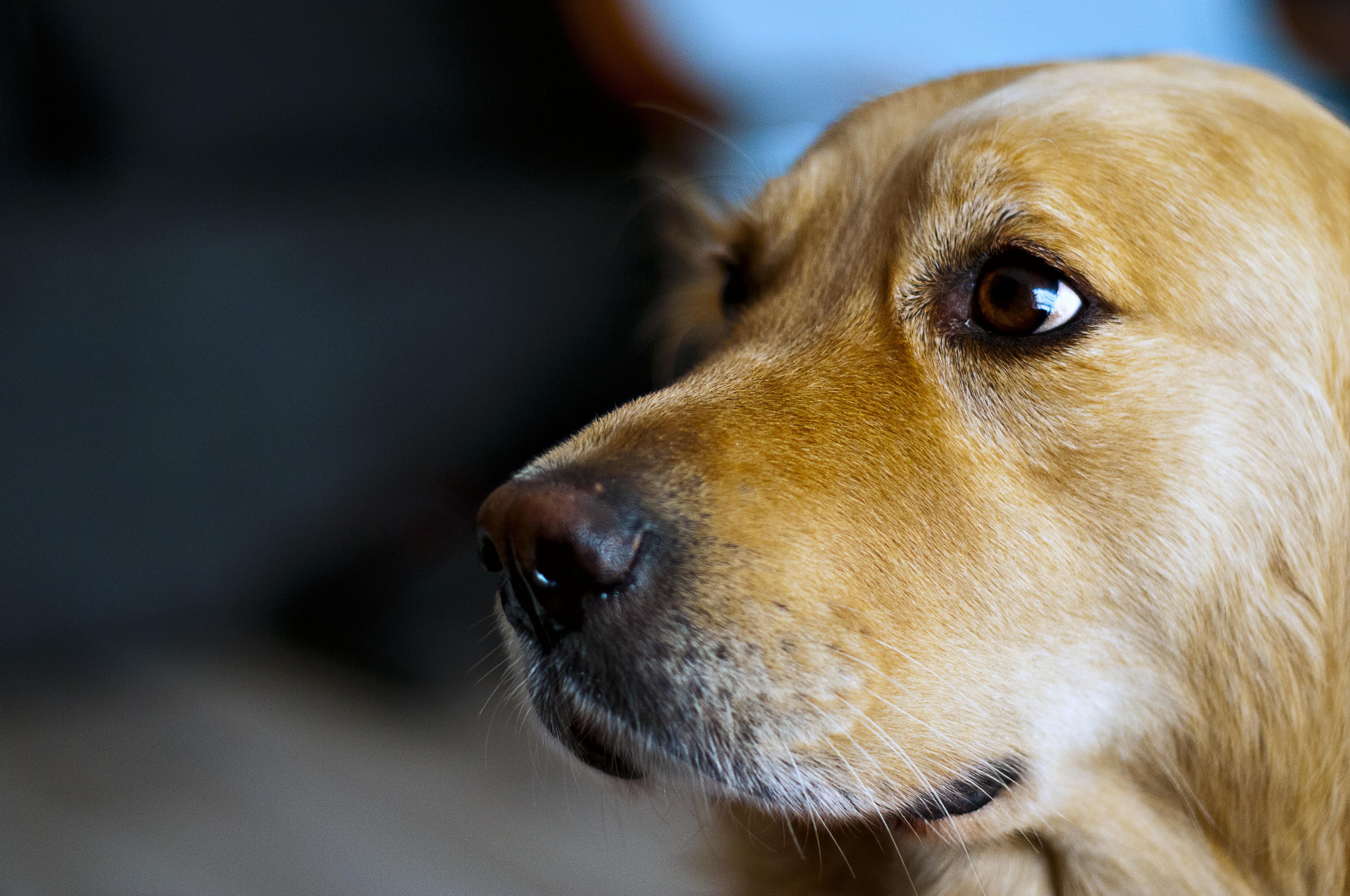 piqûre de guêpe abeille chien