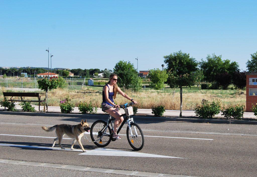 Faire du vélo avec son chien: mode d'emploi - Gublog