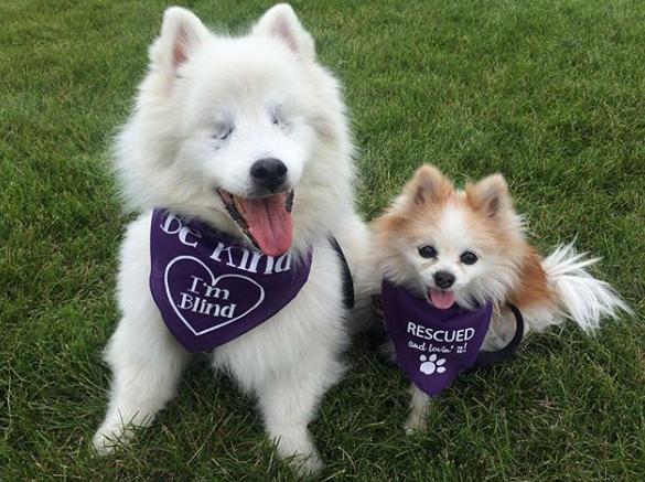 Hoshi le chien aveugle et son ami Zen, The Fluffy Duo