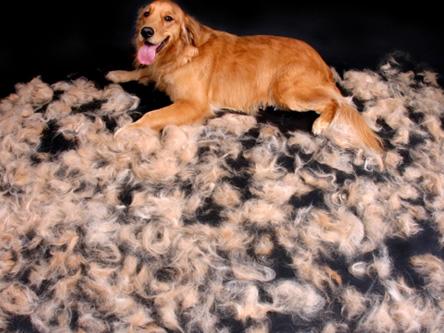 limiter la mue des poils chez le chien