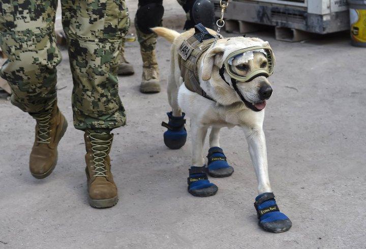 Frida la chienne de sauvetage au Mexique