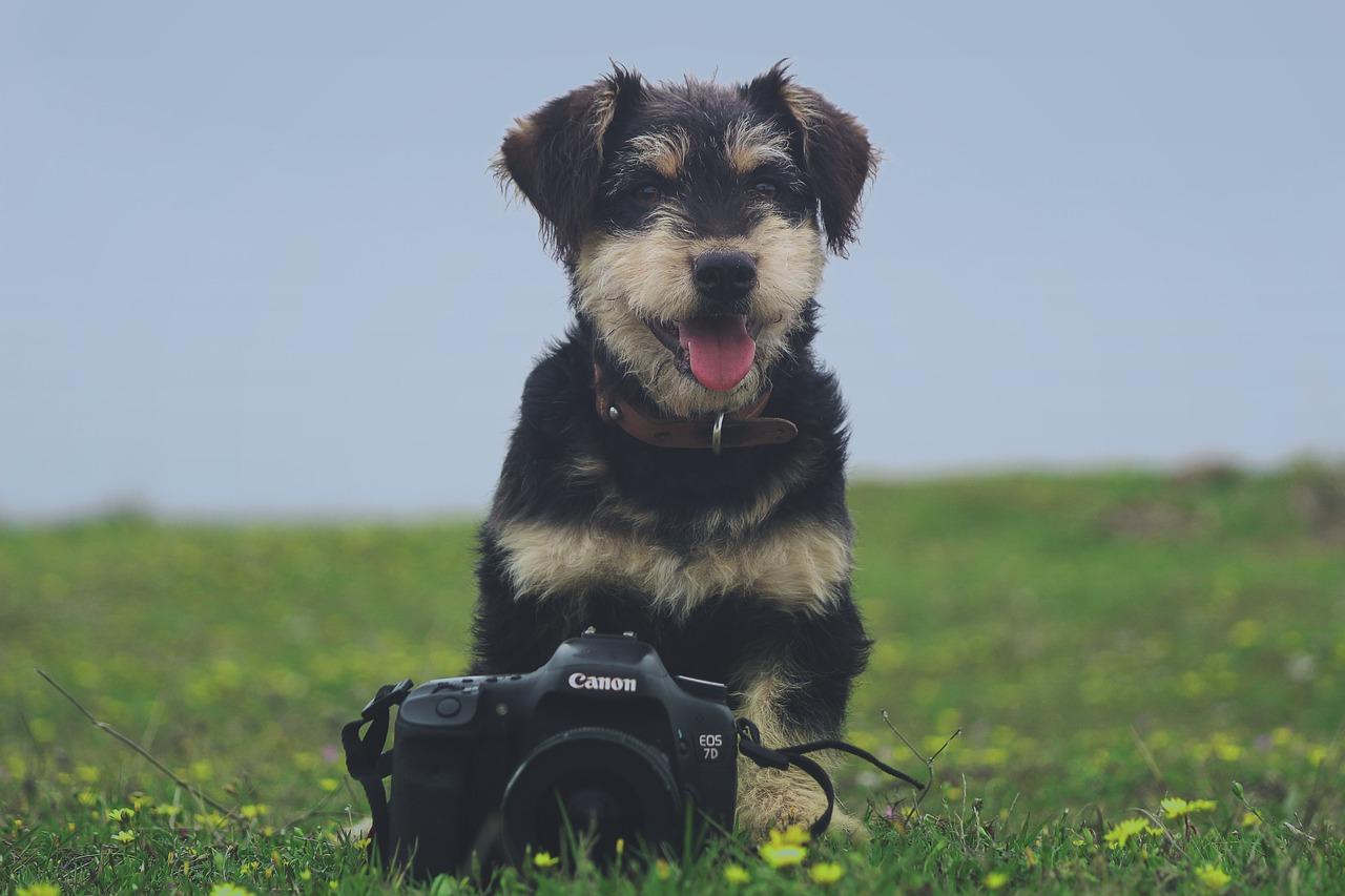 prendre chien photo