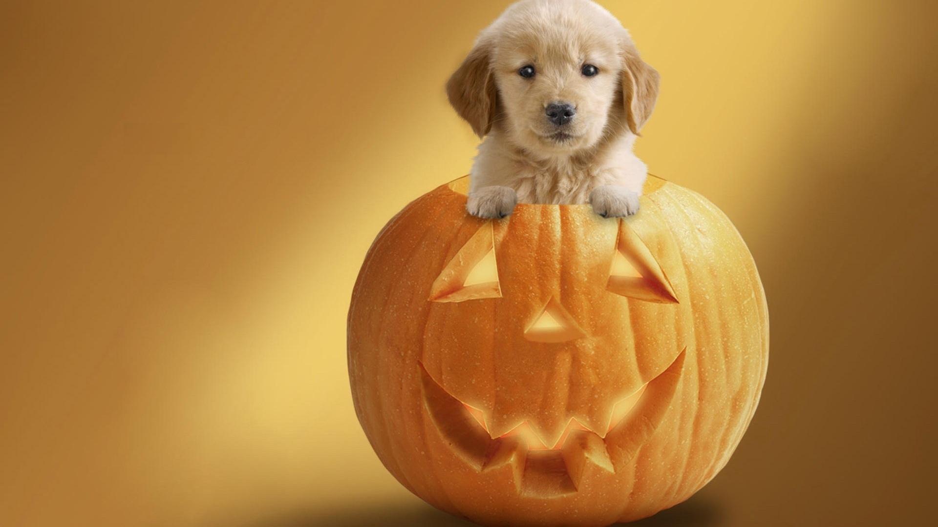 gâteaux à la citrouille chiens halloween