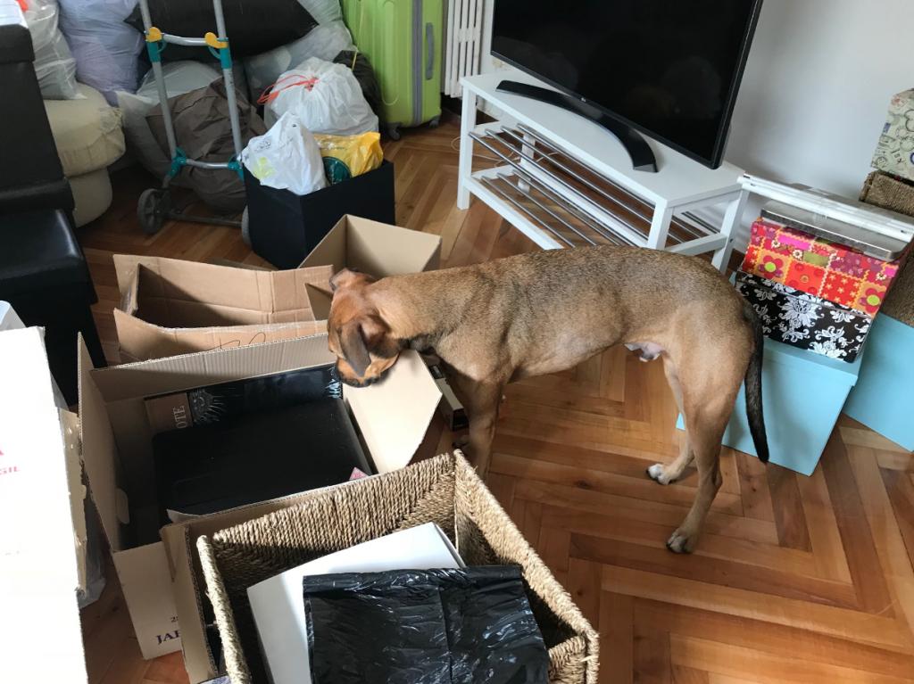 chien cartons déménager