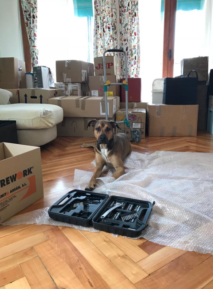 chien déménager papier bulle