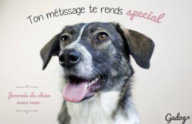 Journée du chien sans race 28 mai