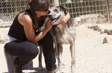 bénévole dans un refuge pour animaux
