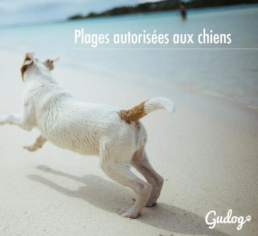 plages été avec un chien