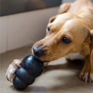jouet distributeur de friandises chien anxiété de séparation MercadoLibre.com.ar
