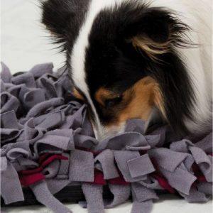 tapis olfactif chien anxiété de séparation zooplus