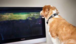television chien anxiété de séparation dogtv