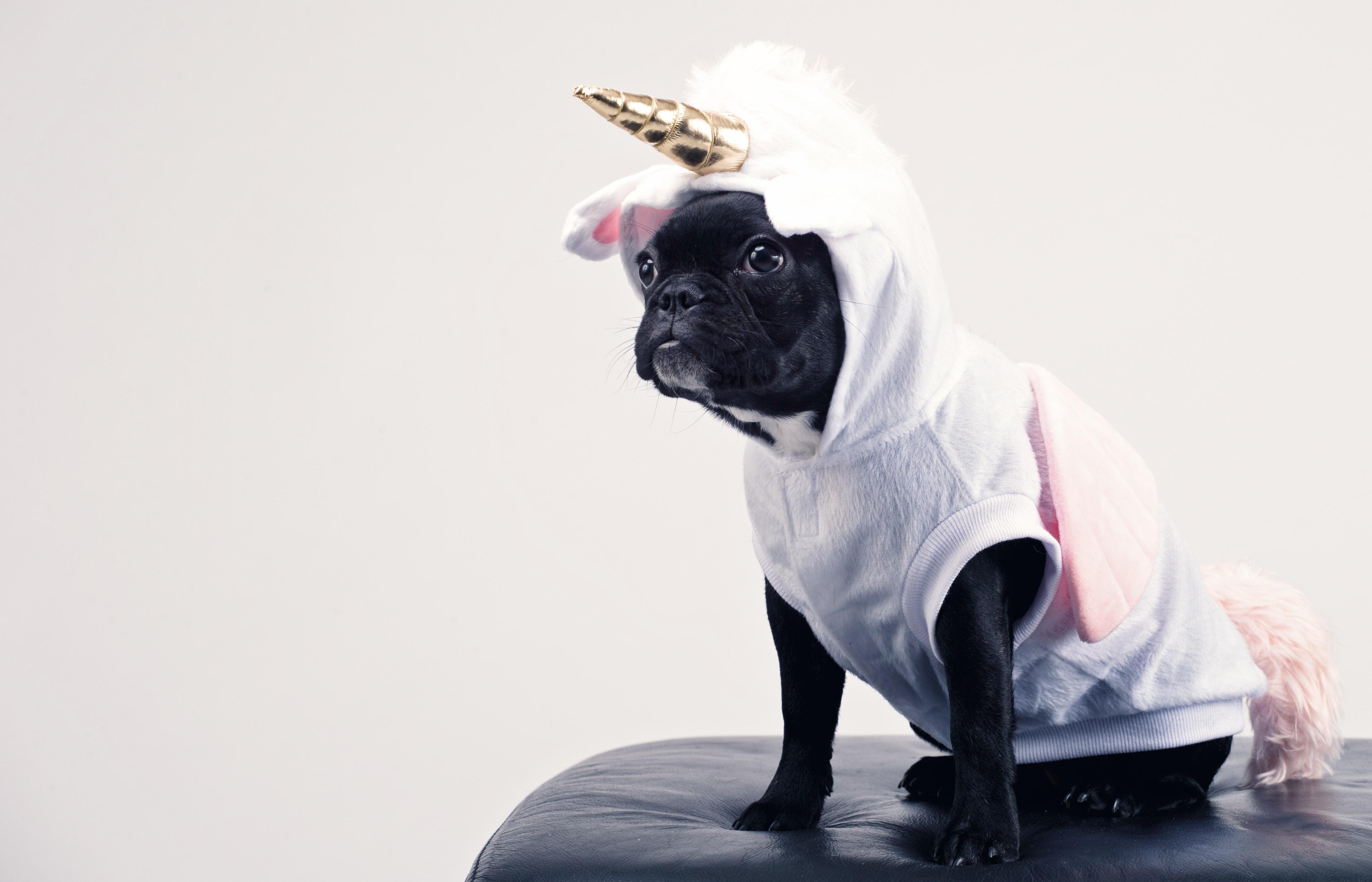 chien carnaval