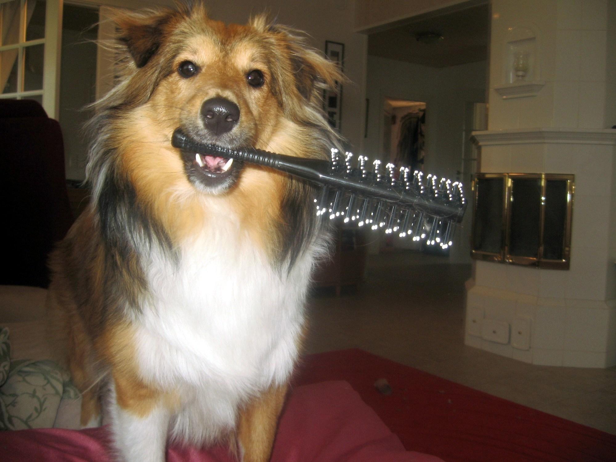 brosser un chien