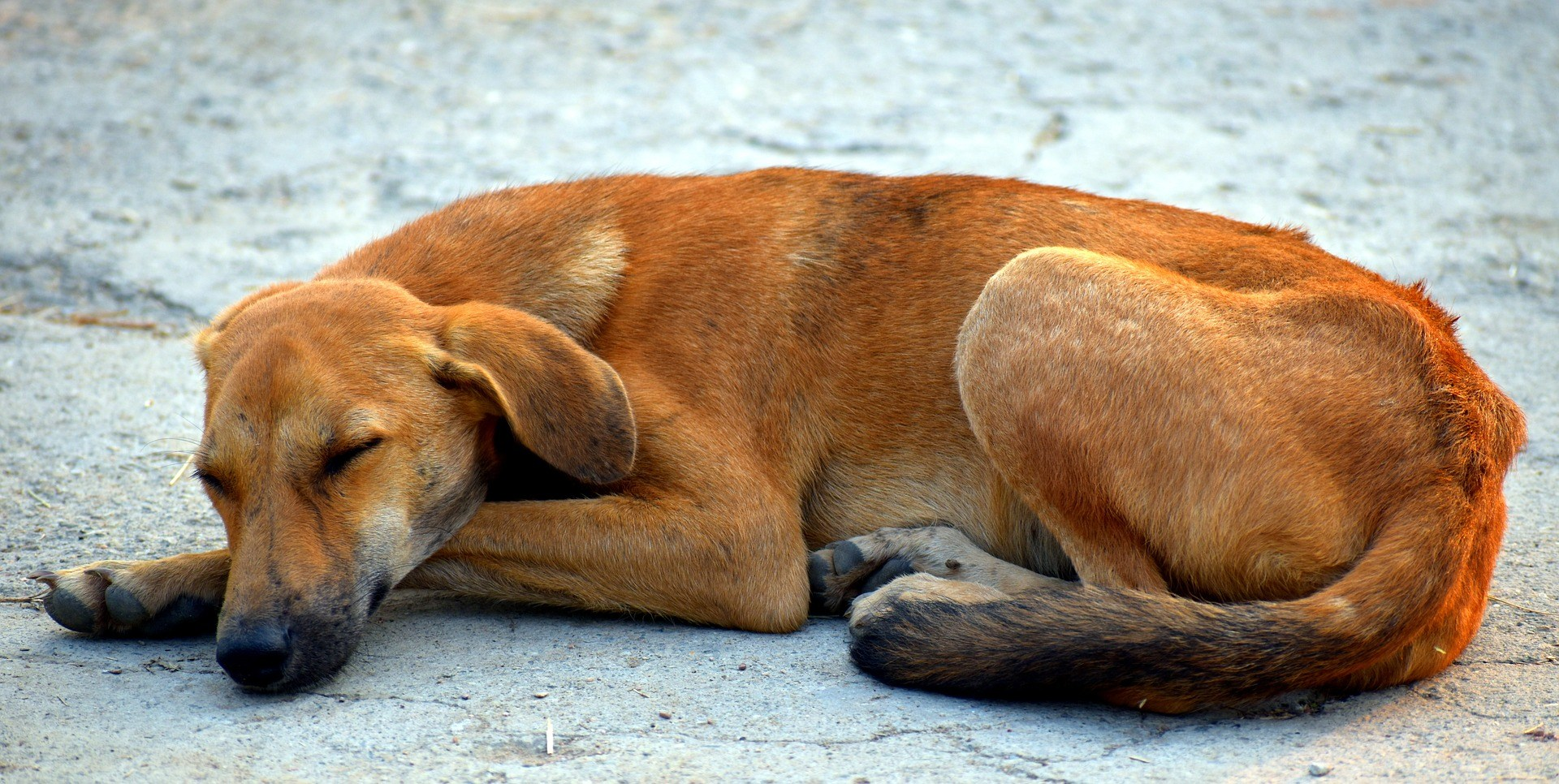 chien abandonné que faire
