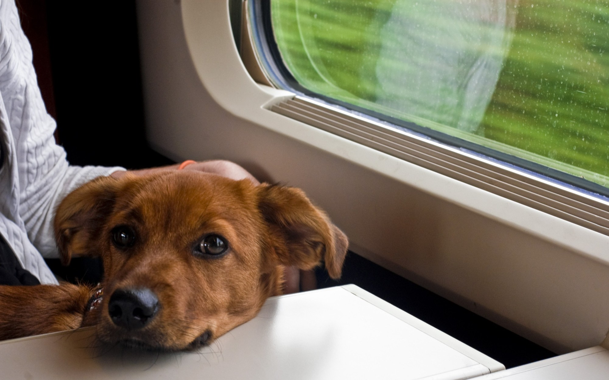 garde de chien vacances weekend