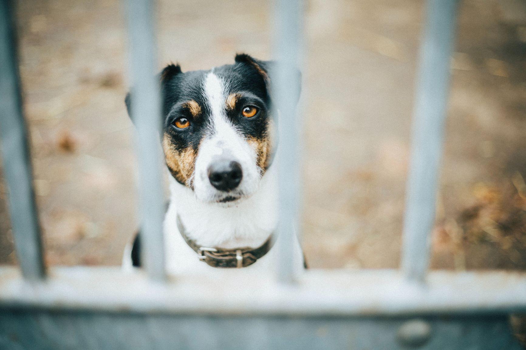 chien triste derrière portail