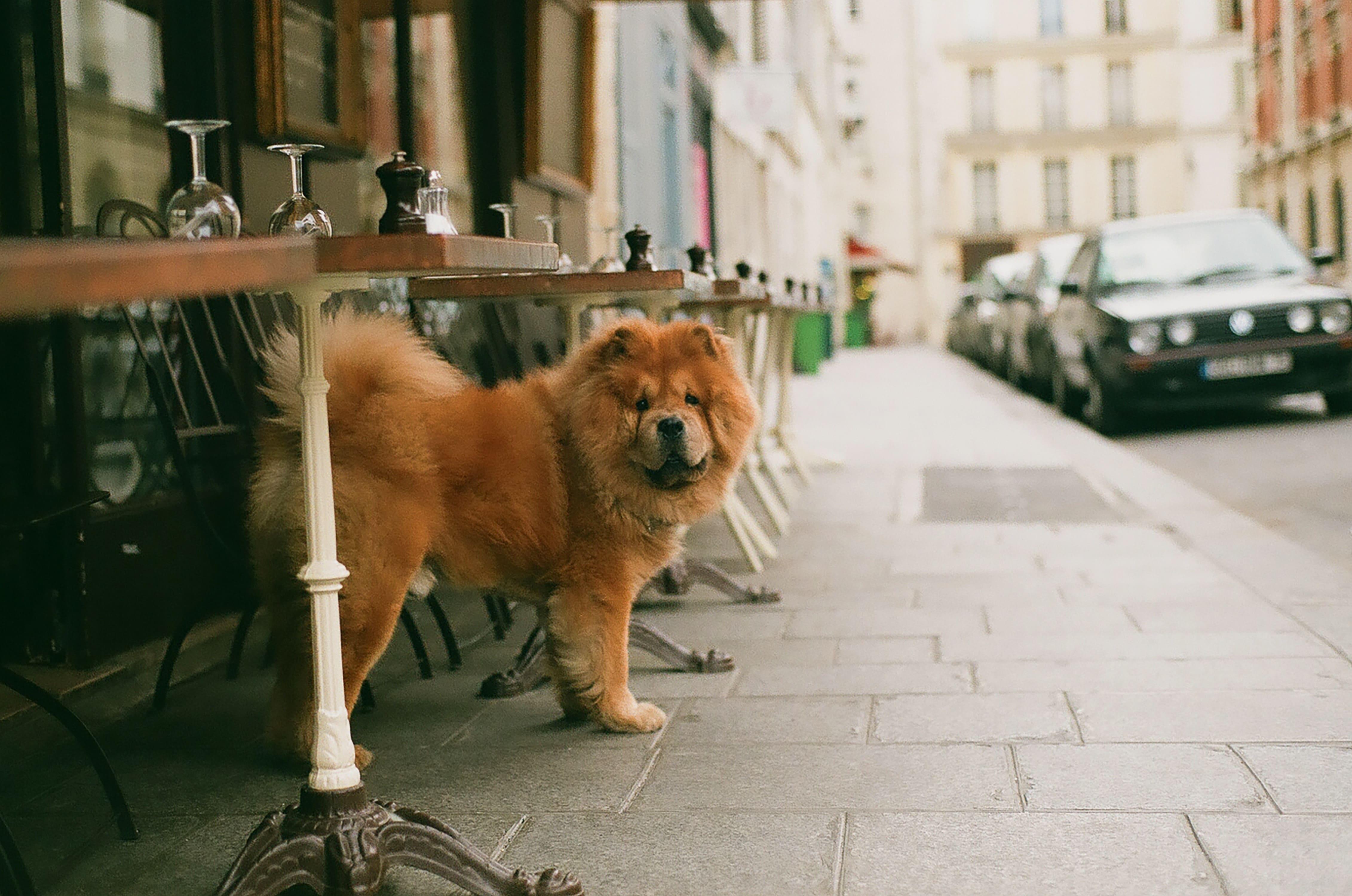 chien terrasse Paris